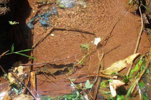 The Water Project: Kidinye Community, Wamwaka Spring -  Wamwaka Spring