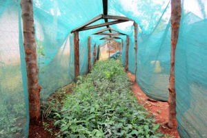 The Water Project: Ebukanga Primary School -  Greenhouse