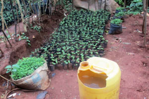 The Water Project: Emabungo Community, Bondeni Spring -  Water For Small Farm