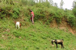 The Water Project:  Boy Herding Goats