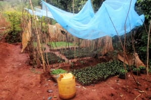 The Water Project: Emabungo Community, Bondeni Spring -  Seedbed Farming