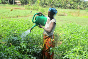The Water Project: Tintafor, Officer's Quarters Community -  Gardening
