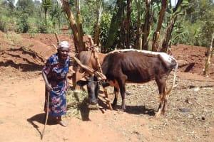 The Water Project: Wanzuma Community, Wanzuma Spring -  Grazing Her Cattle