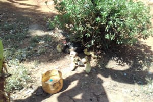 The Water Project: Wanzuma Community, Wanzuma Spring -  Duck With Ducklings