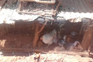 The Water Project: Wanzuma Community, Wanzuma Spring -  Chicken Coop