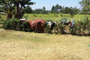 The Water Project: Shitaho Community, Mwikholo Spring -  Drying Clothes