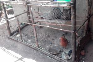 The Water Project: Lutari Community -  Chicken Coop