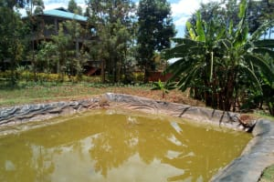 The Water Project: Friends Secondary School Shamakhokho -  Fish Pond