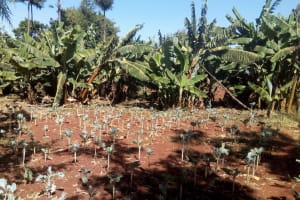 The Water Project: Friends Secondary School Shamakhokho -  School Farm
