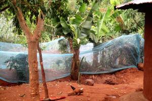 The Water Project: Mutambi Community, Kivumbi Spring -  Garden With Mosquito Net Fence