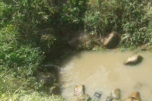 The Water Project: Eshiakhulo Community, Omar Sakwa Spring -  Omar Sakwa Spring