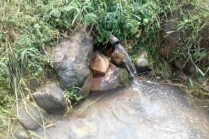 The Water Project: Eshiakhulo Community, Omar Sakwa Spring -  Spring