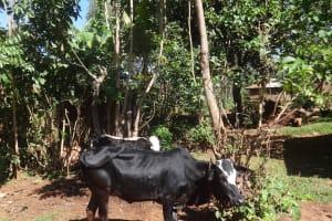 The Water Project: Lutari Community -  Animals Grazing