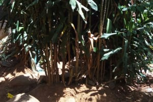 The Water Project: Murumba Community, Muyokani Spring -  Bushes Where Open Defecation Is Practiced