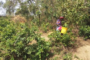 The Water Project: Shikoti Community -  Mrs Amalavi Going To Fetch Water At The Spring