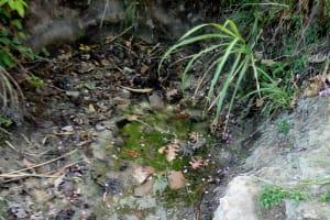 The Water Project: Bukhakunga Community, Indiatsi Omukitsa Spring -  Indiatsi Omukitsa Spring