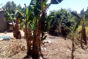 The Water Project: Handidi Community, Malezi Spring -  Banana Plantation