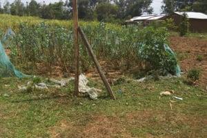 The Water Project: Shikoti Community, Amboka Spring -  Kitchen Garden