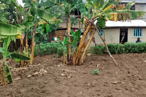 The Water Project: Ebung'ayo Community, Wycliffe Spring -  Banana Trees