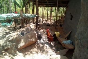 The Water Project: Handidi Community, Kadasia Spring -  Dish Rack And Chicken