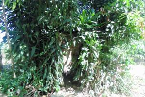 The Water Project: Shiamboko Community, Oluchinji Spring -  Natural Bathing Room
