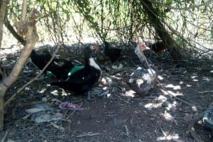 The Water Project: Handidi Community, Malezi Spring -  Ducks