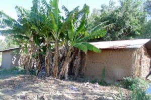 The Water Project: Shiamboko Community, Oluchinji Spring -  Banana Trees