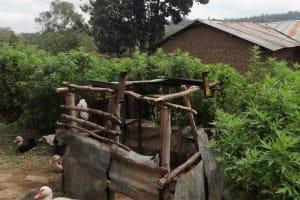 The Water Project: Shitungu Community B, Charles Amala Spring -  Duck House