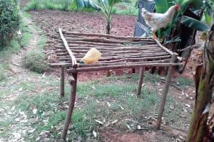 The Water Project: Igogwa Community -  Chicken On Dish Rack