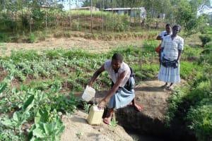 The Water Project: Shiamboko Community, Oluchinji Spring -  Fetching Water