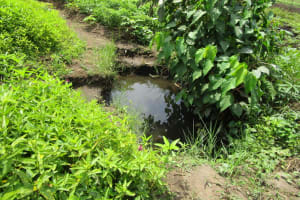 The Water Project: Royema, New Kambees -  Swamp