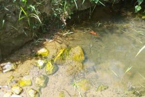 The Water Project: Shikoti Community -  Ambale Spring