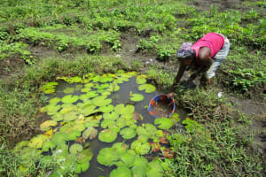 The Water Project: Royema, New Kambees -  Fetching Swamp Water