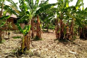The Water Project: Musunji Primary School -  Farm