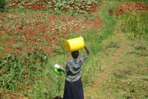 The Water Project: Shikhuyu Community -  Carrying Water