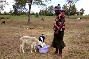 The Water Project: Bukhakunga Community, Indiatsi Omukitsa Spring -  Watering Her Sheep