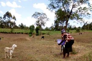 The Water Project: Bukhakunga Community, Indiatsi Omukitsa Spring -  Water Her Sheep