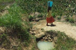 The Water Project: Mukhuyu Community, Shikhanga Spring -  Mrs Dorah Fetching Water