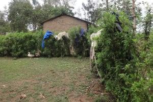 The Water Project: Mwiyala Community, Benard Spring -  No Clothesline