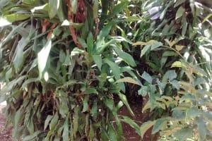 The Water Project: Futsi Fuvili Community, Shikanga Spring -  Bathing Shelter