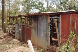 The Water Project: Mungulu Community, Zikhungu Spring -  Cattle Shed