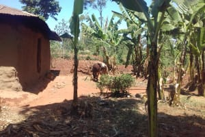 The Water Project: Isese Community, Sylvanus Spring -  Household