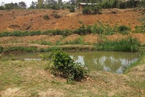 The Water Project: Shikhambi Community, Daniel Inganga Spring -  Fish Pond