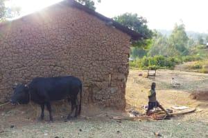 The Water Project: Mwiyala Community, Benard Spring -  Boy Watching Cows