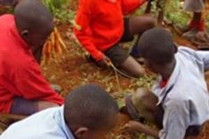 The Water Project: Ebukanga Primary School -