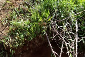 The Water Project: Timbito Community, Atechere Spring -  Atechere Spring