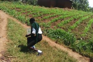 The Water Project: St. Kizito Lusumu Secondary School -  Alternative Source