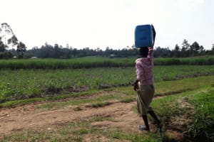 The Water Project: Luyeshe Community, Simwa Spring -  Carrying Water