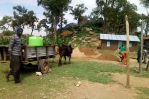 The Water Project: Kalenda Primary School -  Oxen Delivering Water For Construction