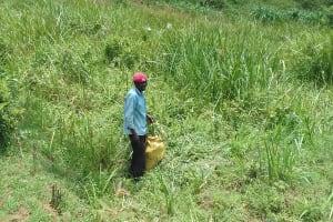 The Water Project: Irungu Community, Irungu Spring -  Weedy Area Around The Spring